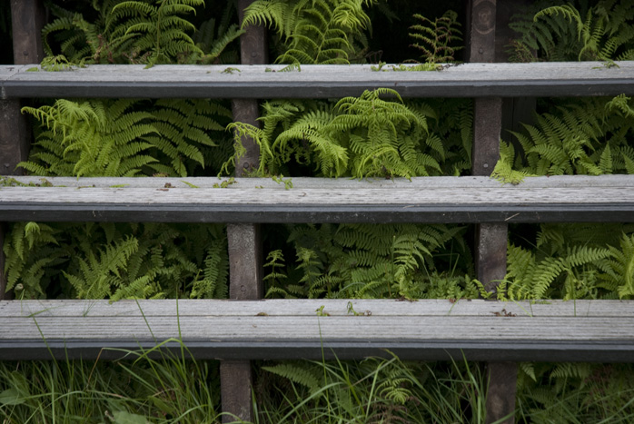 Ferns and Steps
